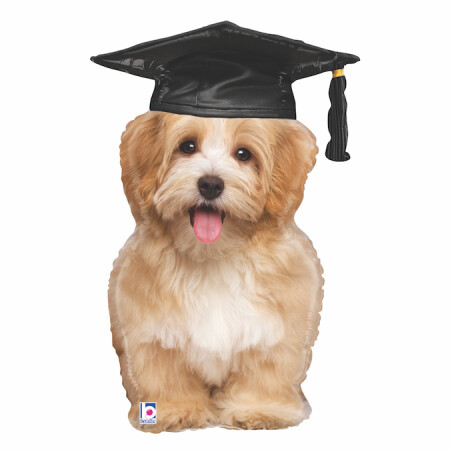 35544 Grad Puppy